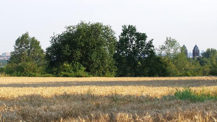 Photo des champs jouxtant le bois du Val des Béguines aujourd'hui © Benoît Elleboudt